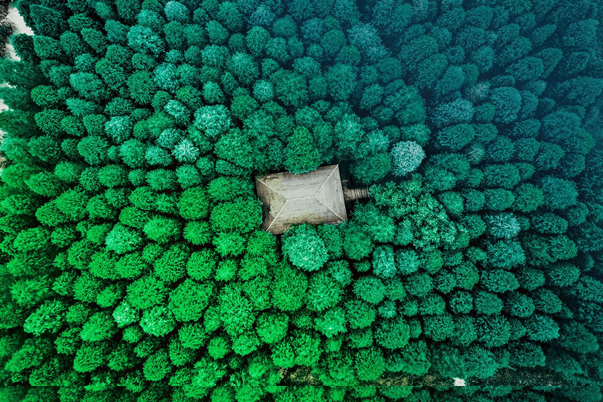 Dense-Forest