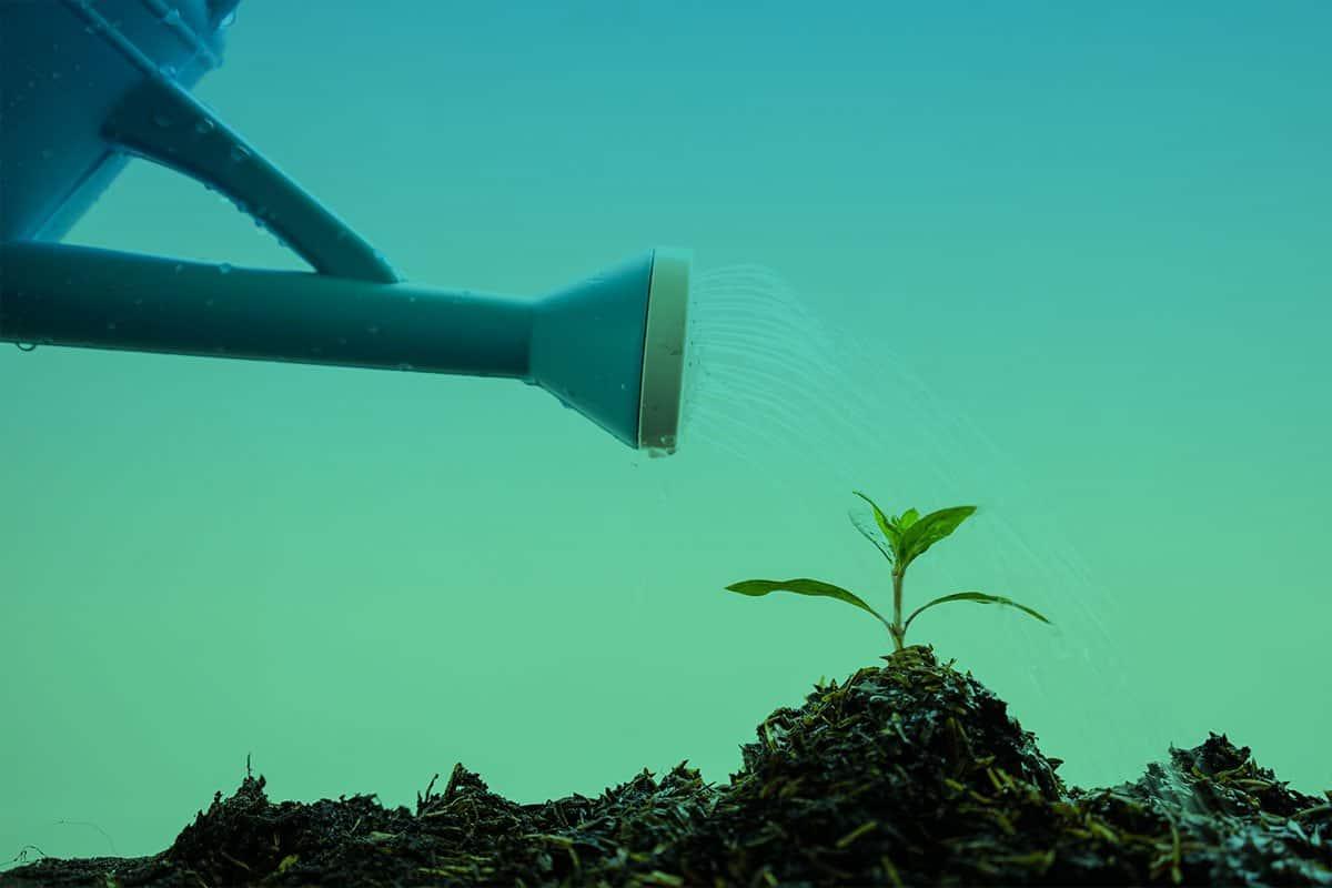 Nurturing-Plant